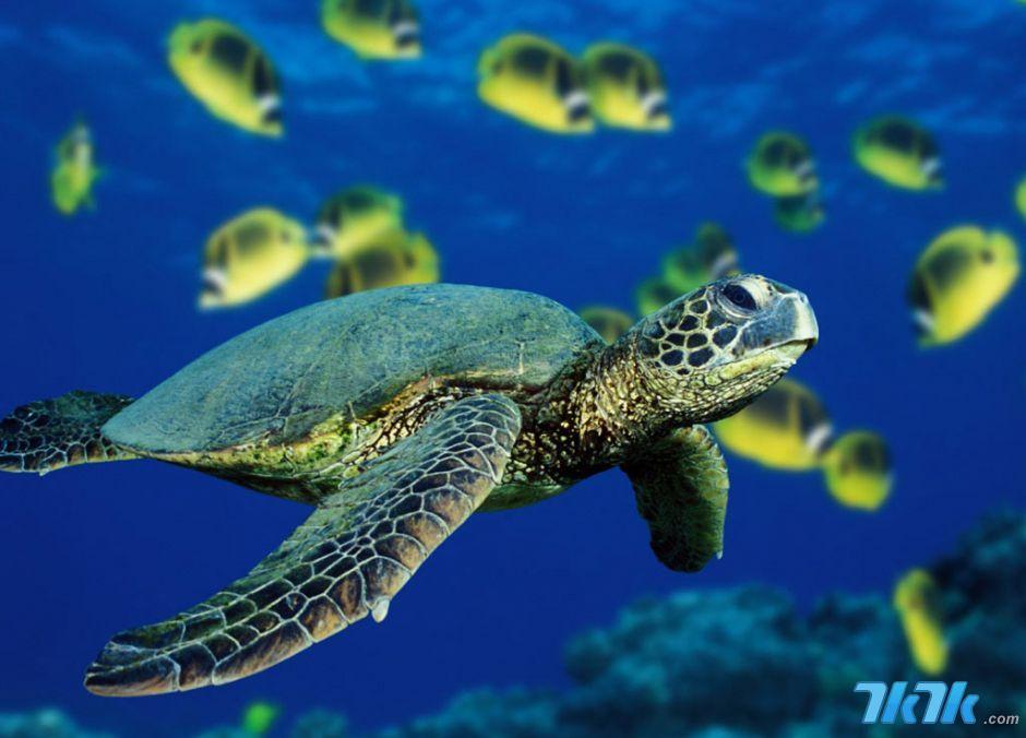海底世界壁纸