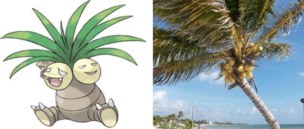椰蛋树——椰子树
