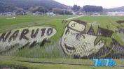 """所谓的""""稻田艺术""""或""""田んぼアート""""(痛稻田),与日本国内流行的大部分""""痛""""文化类似,传统的农业也逐渐走上了艺术和时尚的道路。制作""""痛稻田""""无需使用人工的颜料和色调,取而代之的是农民借助作物自然的颜色特质再依靠极高的手艺来完成。"""