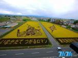"""农民在稻田里""""作画"""",需要耗时数月种植而成。"""
