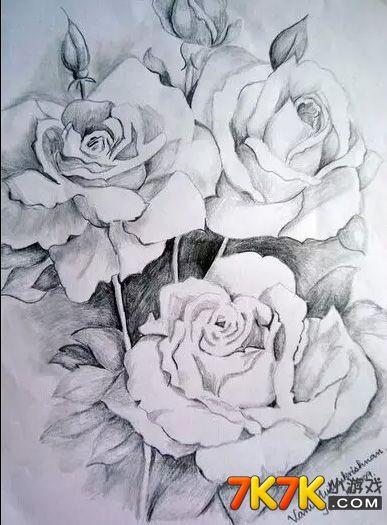 没想到玫瑰花还能素描出这种让人惊艳的效果呢